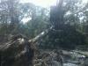 realtree tree removal