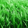 Caring for St. Augustine Grass in the Winter