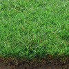 Sod vs. Seed: Which is Right for Your Lawn?