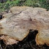5 Reasons to Remove Tree Stumps