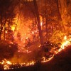 Clearing Your Land to Stop Deadly Brush Fires