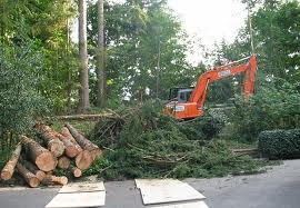 Residential Land Clearing