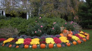 Fall Lanscaping