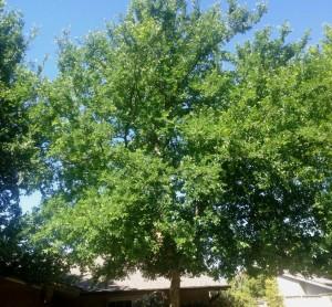 tree care 7_10
